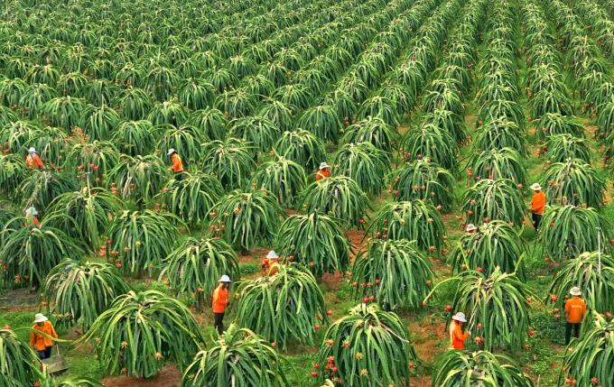 Bình Thuận phát triển ngành nông nghiệp theo hướng hiện đại, bền vững